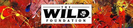 Melissa Ayr Wild Thing Banner Artist The Wild Foundation